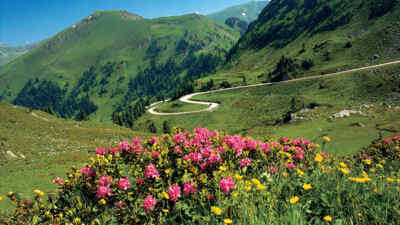 flower meadow nockalm