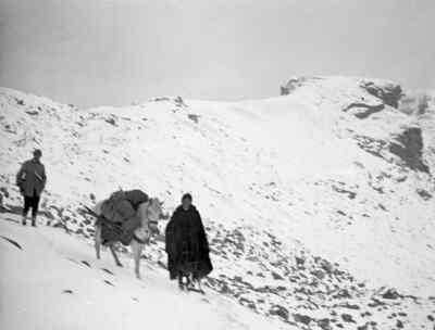 Zwei Bergsteiger mit einem Pferd
