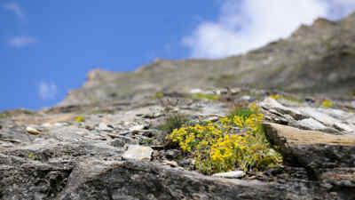 Gewächs auf einem Felsen