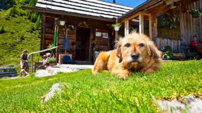 Ein Ausflug mit dem Hund in die Berge